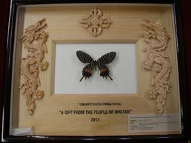 Ludlow's Bhutan Swallowtail