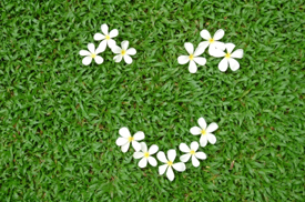 Plumeria On Grass